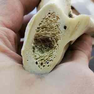 Obrázek 'The-inside-of-a-bone'