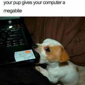 Obrázek 'Those-puppy-eyes'