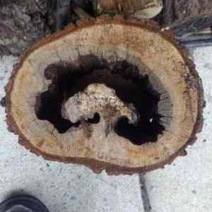 Obrázek 'Tree-in-a-tree'