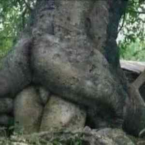 Obrázek 'Tree-love'