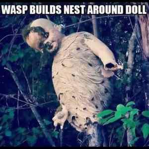 Obrázek 'WaspsNEST'
