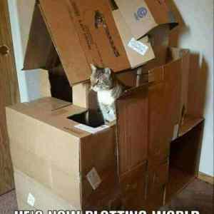 Obrázek 'catfort'
