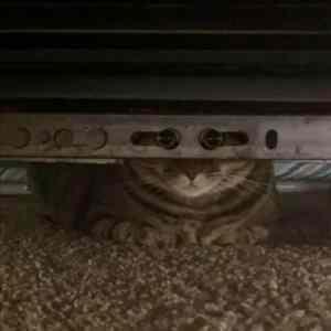 Obrázek 'catspy'