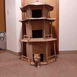 Obrázek 'cattower'