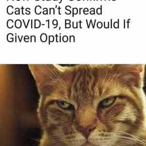 Obrázek 'covidnews'