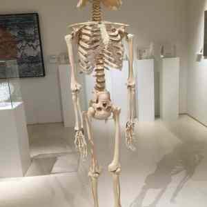Obrázek 'darthskeleton'
