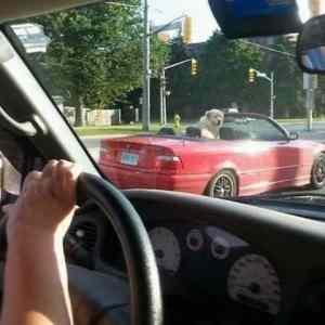 Obrázek 'dog-rider'