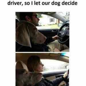 Obrázek 'dogdecide'