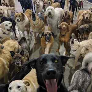 Obrázek 'dogselfie'