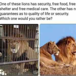 Obrázek 'freeandcaptured'