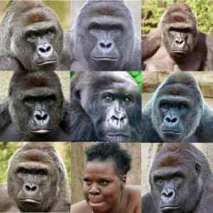 Obrázek 'gorilaz'