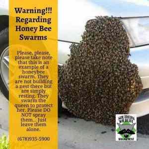 Obrázek 'honeybeeswarms'