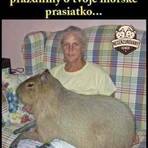 Obrázek 'kapybara'