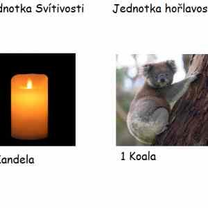 Obrázek 'koala'