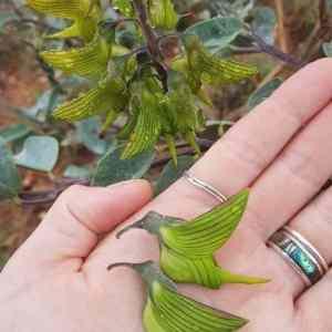 Obrázek 'kolibricii'