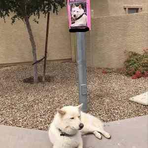 Obrázek 'lost-dog'