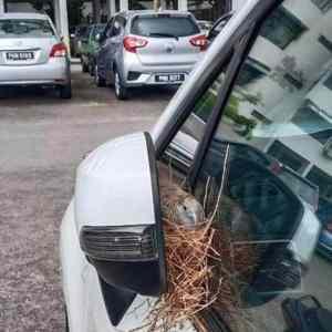 Obrázek 'mirror-nest'