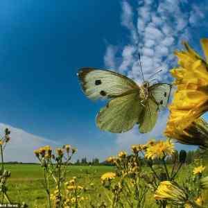 Obrázek 'motyle01'