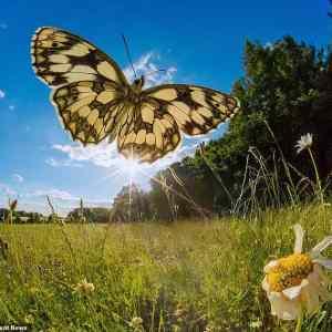 Obrázek 'motyle04'