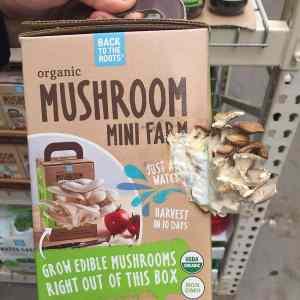 Obrázek 'mushroomminifarm'