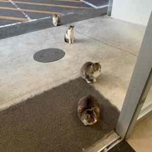 Obrázek 'quarantinediscipline'