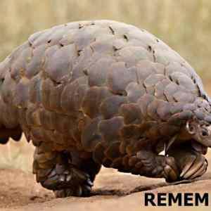 Obrázek 'remember'