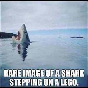 Obrázek 'shark-lego'