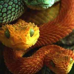 Obrázek 'snakes'