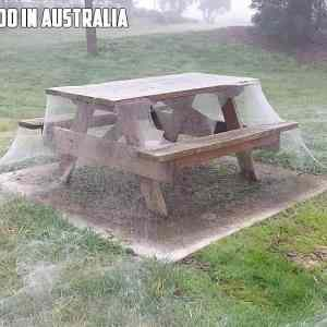 Obrázek 'spiders-australia'