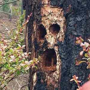 Obrázek 'treeskull'