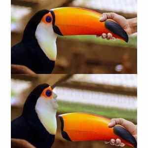 Obrázek 'tukannos'