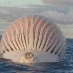 Obrázek 'velrybapodtlakem'