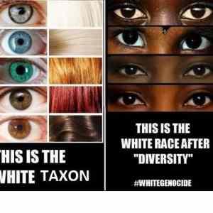 Obrázek 'whitetaxon'