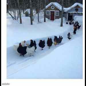 Obrázek 'zimni-stezka'