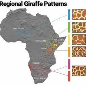 Giraffe-patterns-based-on-regions