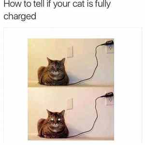 cat is fully charged